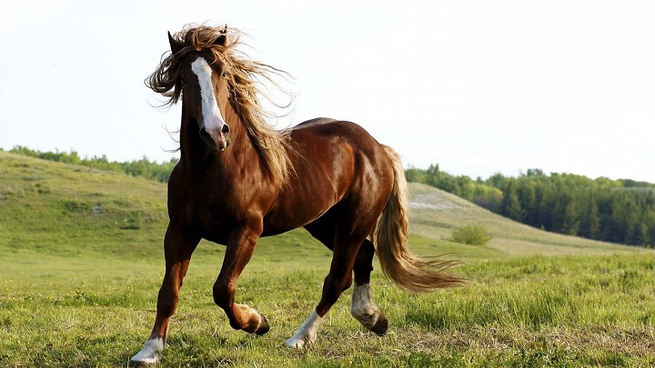 comprar caballo2