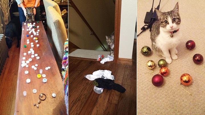 gatos ladronzuelos