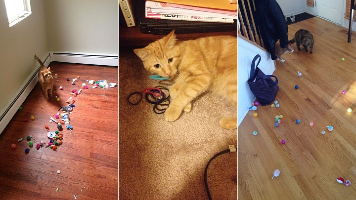 gatos ladronzuelos1