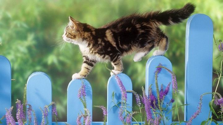 mascotas cuidados verano1