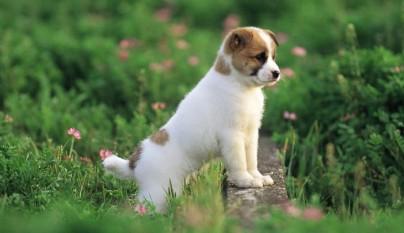 nombre cachorro