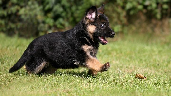 nombre cachorro1