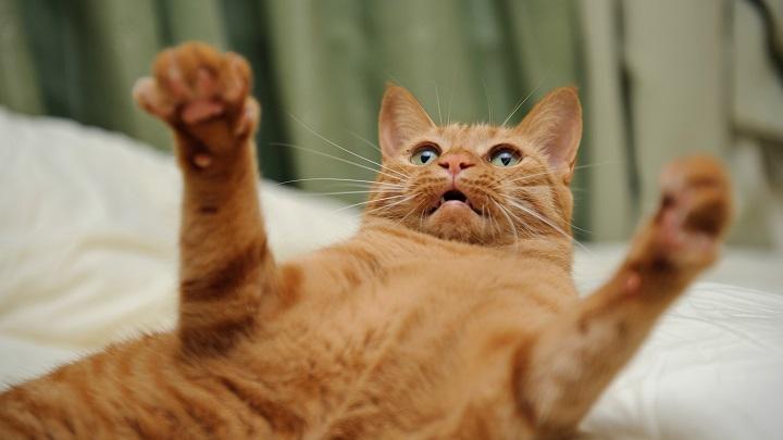 pata de gato lesiones