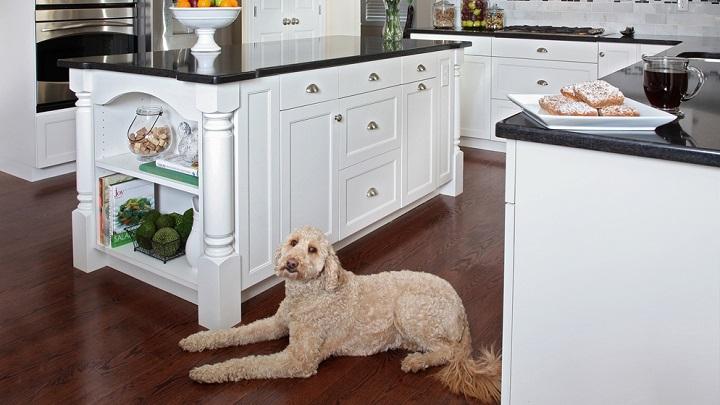 perro cocina1