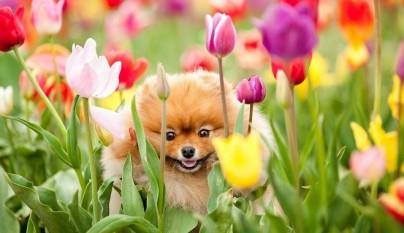 perro-orina-jardin