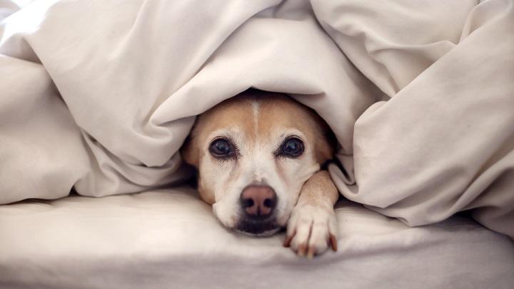 temblor perros1