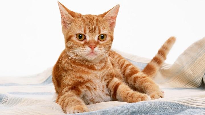 gato casting
