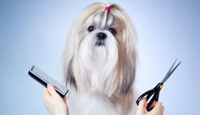 peluqueria canina escuela
