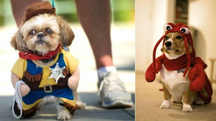 perros disfrazados foto