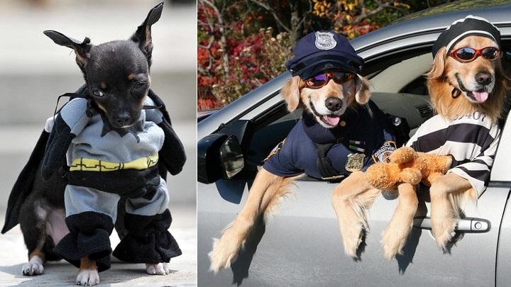perros disfrazados foto1