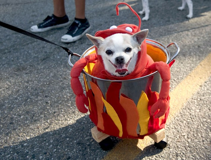 funny dog costumes - 708×536