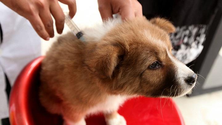 vacuna perro calendario1