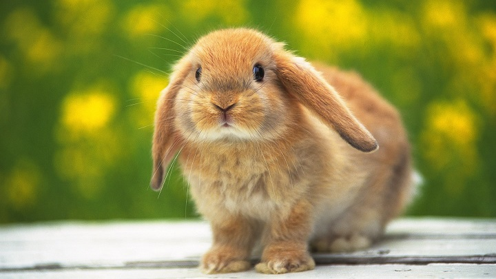 conejo nombres