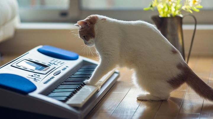 gato musica1