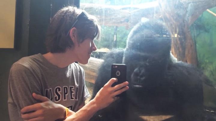 gorila smartphone
