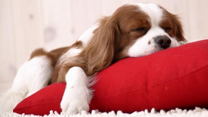 masajes perros