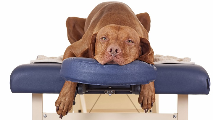 masajes perros1