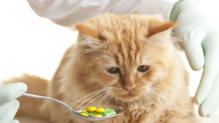 medicamento mascota1