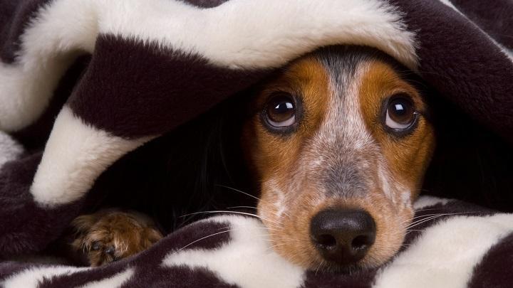 perros epilepsia sintomas