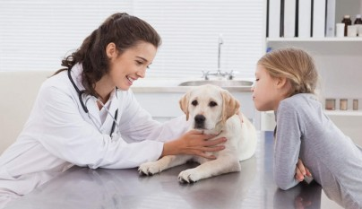 perros epilepsia sintomas1