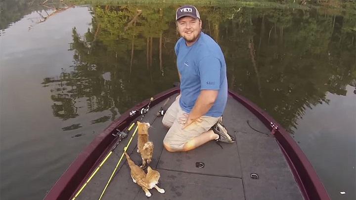rescate gatitos