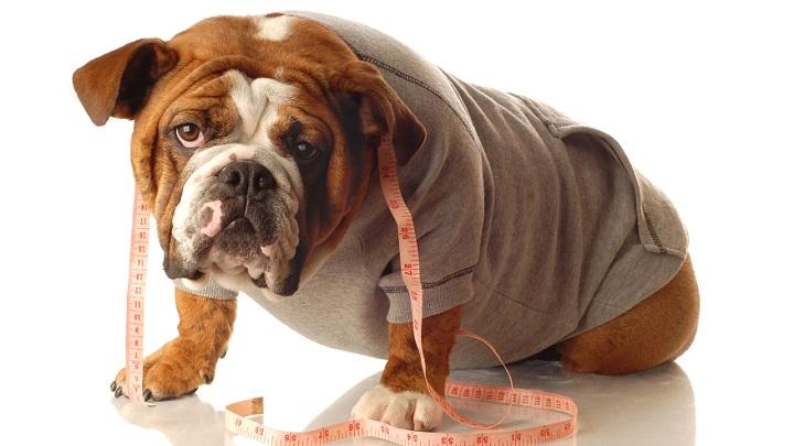 evitar obesidad