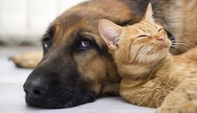 gato perro escoger