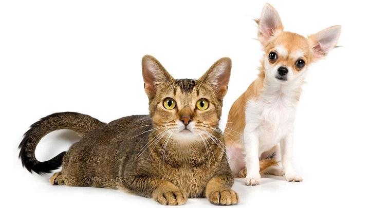 gato perro escoger1
