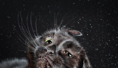 gatos sacudiendose 4