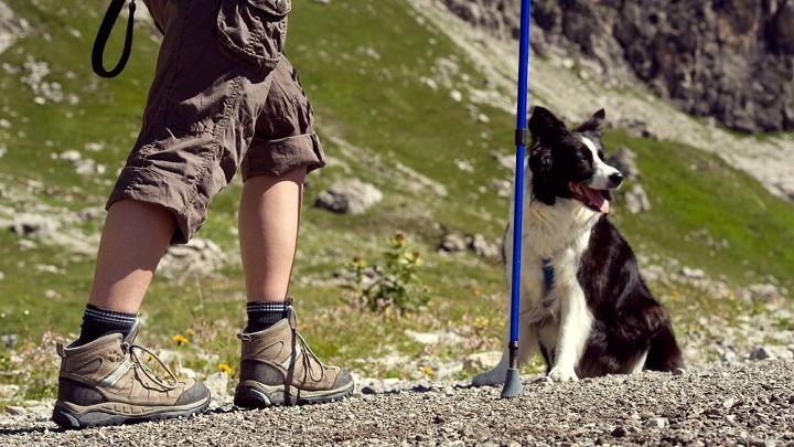 perro senderismo1