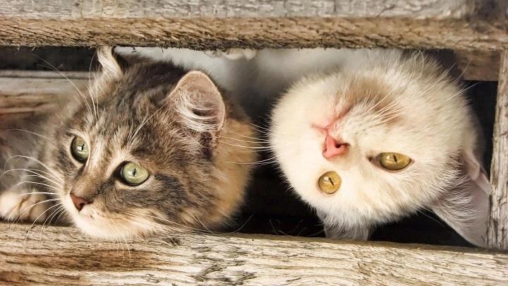 gato estres1