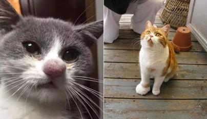 gato picadura foto