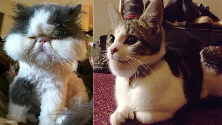 gato picadura foto1