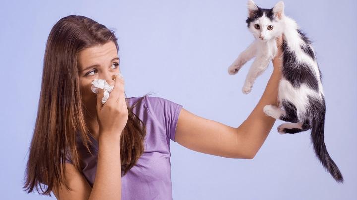 gatos alergia1