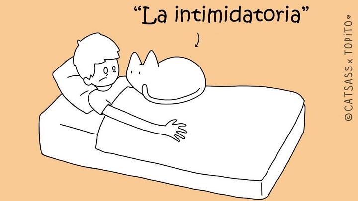 gatos durmiendo con humanos ilustraciones