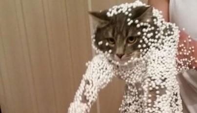 gatos errores1