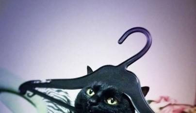 gatos errores11