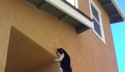 gatos errores12