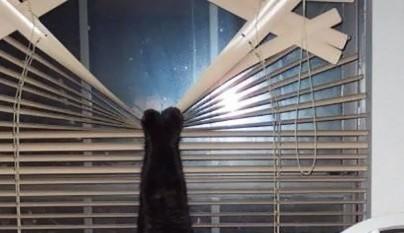 gatos errores22