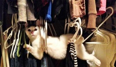 gatos errores24