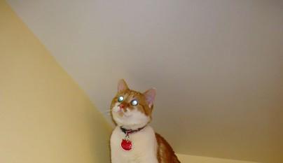 gatos errores26