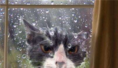 gatos errores3