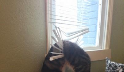 gatos errores4