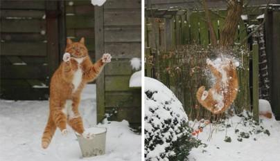 gatos errores9
