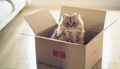 mudanza gatos consejos
