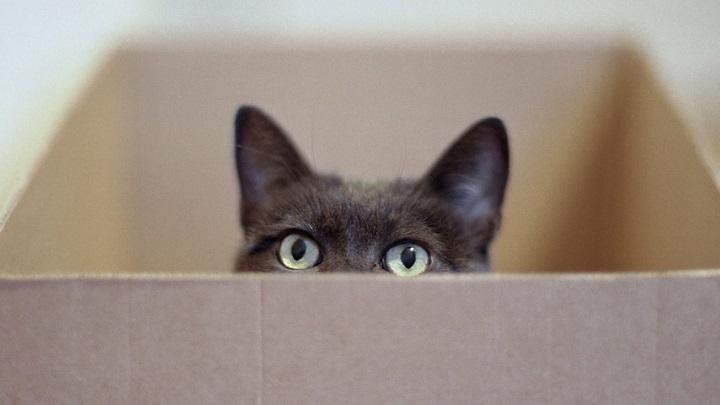 mudanza gatos consejos1