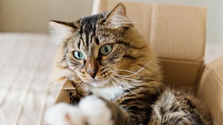 mudanza gatos1