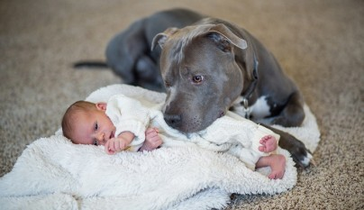 perro tapando bebe