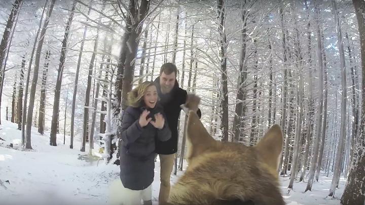perro video boda