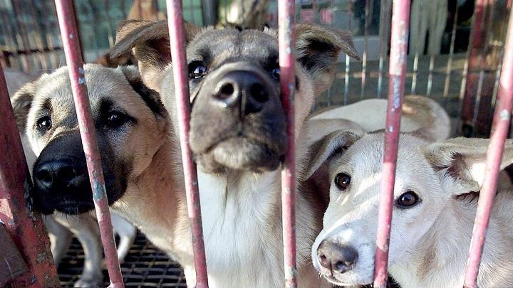 Derechos Animales1